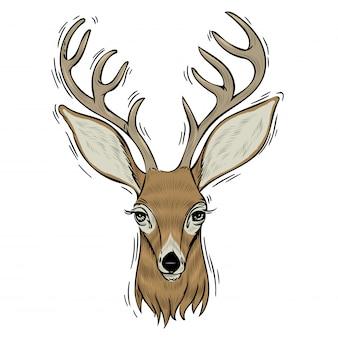 Hand drawn head of deer.