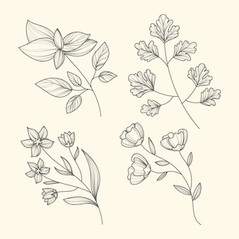 Hand drawn herbs and flowers