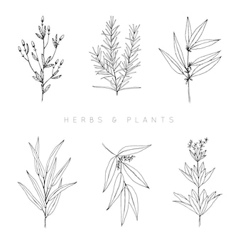 Hand drawn herbs & plants collection