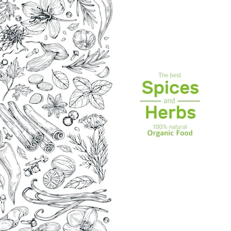Hand drawn herbs and spices banner