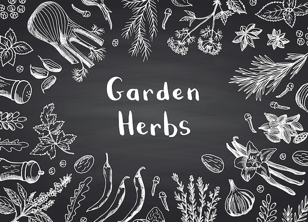 Hand drawn herbs and spices frame background