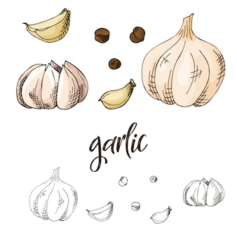 Hand drawn herbs and spices illustration
