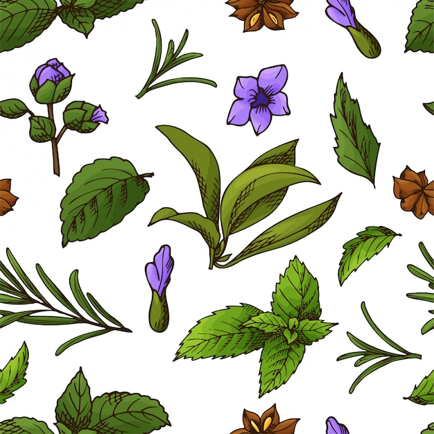 Hand drawn herbs and spices seamless pattern