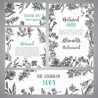 Hand drawn herbs and wild flowers banner vintage collection