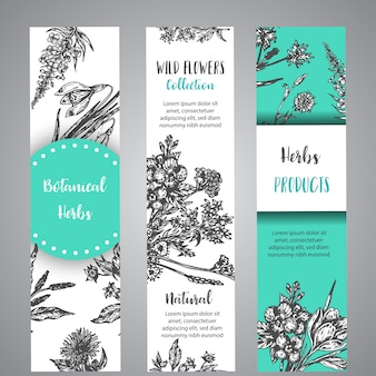 Hand drawn herbs and wild flowers banners vintage floral collection with wild flowers