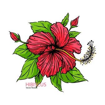 손으로 그린 히비스커스 꽃 현실.