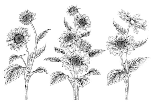 手描きの白い背景に分離された非常に詳細なラインアートひまわり装飾セット