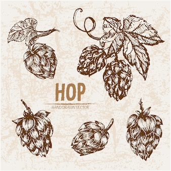 Hand drawn hop collection