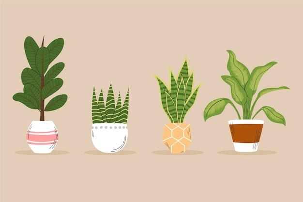 손으로 그린 houseplant 컬렉션