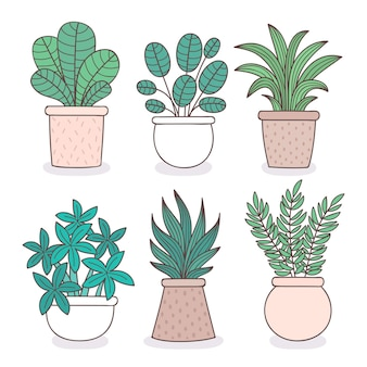 Hand drawn houseplant collection