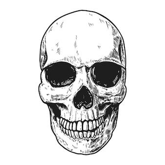 밝은 배경에 손으로 그린 인간의 두개골. 로고, 레이블, 기호, 핀, 포스터, 티셔츠 디자인 요소입니다. 벡터 일러스트 레이 션
