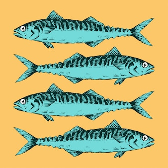 Hand Drawn Illustration a Group of mackerels