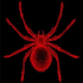 Hand drawn illustration in chalk style of red spider
