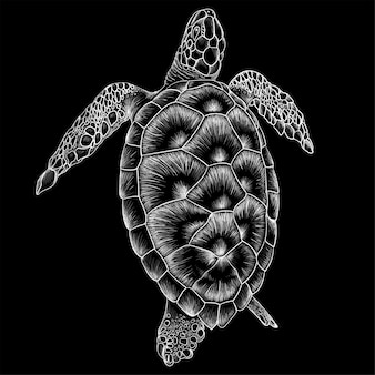 Hand drawn illustration in chalk style of turtle
