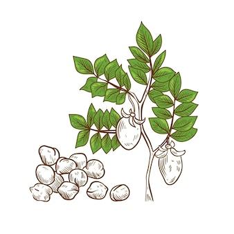 手描きイラストひよこ豆豆と植物