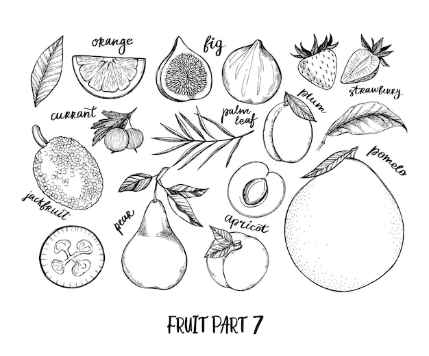 Hand drawn illustration - collection of tropical and exotic fruits. healthy food elements.