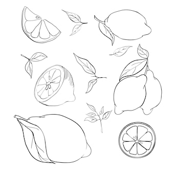 手描きイラスト-レモンのコレクション。葉と花植物