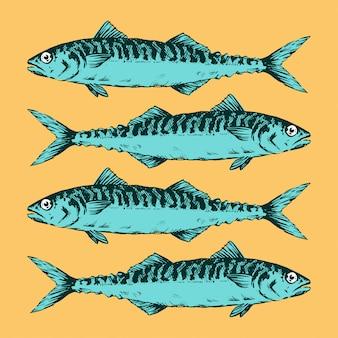 Hand drawn illustration a group of mackerels