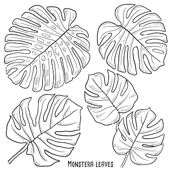 Hand drawn illustration of monstera leaves