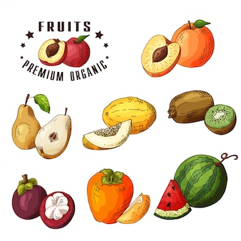 Ручной обращается иллюстрации груша, дыня, киви, абрикос, мангустан, хурма, арбуз.