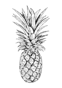 Hand drawn illustration of pineapple. realistic sketch of fruit. isolated vector