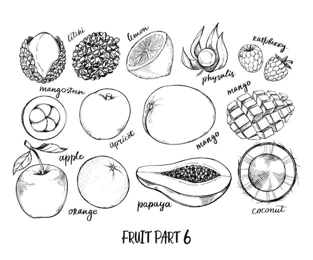 手描きイラスト-熱帯とエキゾチックなフルーツ。健康食品の要素。アップル、パパイヤ、ココナッツ、マンゴー