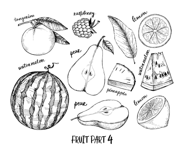 Hand drawn illustration - tropical and exotic fruits. raspberry, watermelon, pear