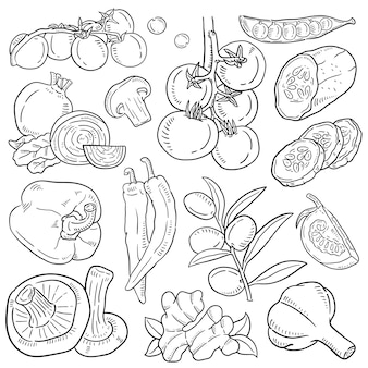 Hand drawn illustration of vegetable.