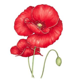 빨간 양귀비의 꽃다발과 함께 손으로 그린 그림