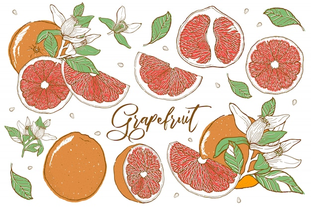 Hand drawn illustrations of beautiful orange fruits.