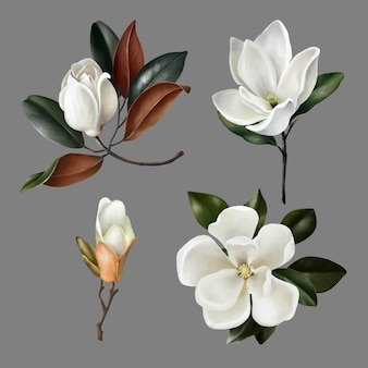 Hand drawn illustrations of cute realistic magnolias flowers and buds