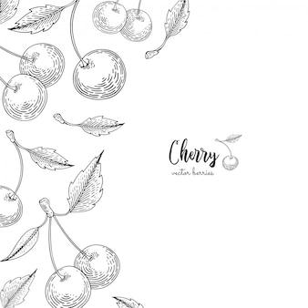 Ручной обращается иллюстрации вишни на белом фоне. ягоды выгравированы стиль иллюстрации.