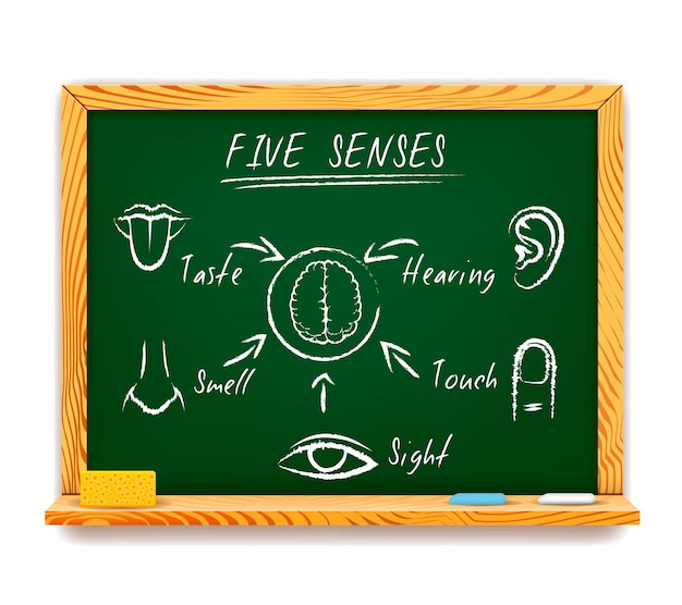 Hand-drawn infographic on chalkboard of the five senses depicting sight, touch, smell, taste and hearing with arrows pointing to a human brain