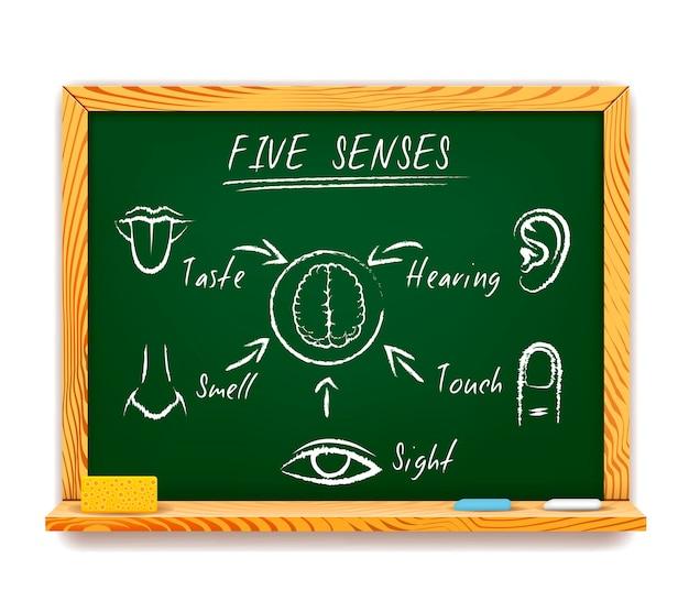 Infografica disegnata a mano sulla lavagna dei cinque sensi raffigurante vista, tatto, olfatto, gusto e udito con frecce che puntano a un cervello umano