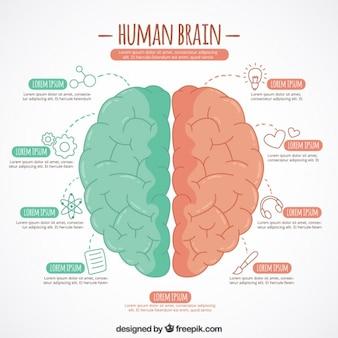 두 가지 색상으로 뇌의 손으로 그린 infographic 템플릿