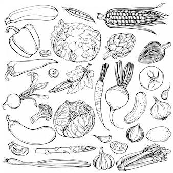 手描きのインクスケッチ。さまざまな野菜のセット。