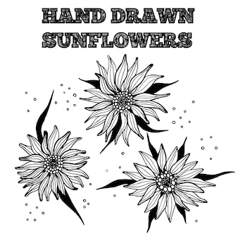 Hand drawn ink sunflower. isolated black and white flowers vector illustration