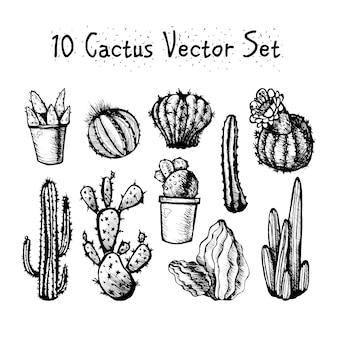 手描きの分離されたcactusesセット。テキスタイル、プリント、エッチング用ヴィンテージスタイルのサボテン