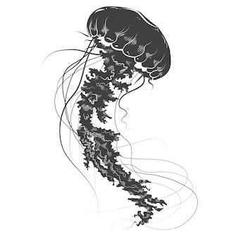 手描きのクラゲ