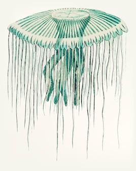 Hand drawn of jellyfish