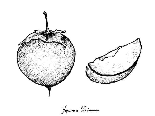 Hand drawn of kaki or japanese persimm on