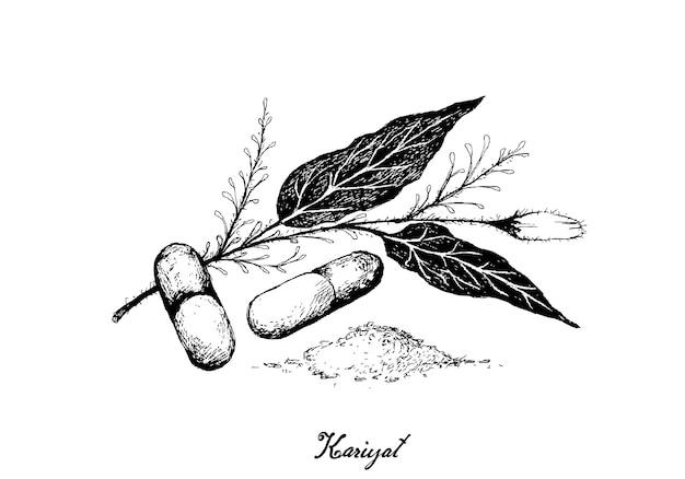 Hand drawn of kariyat plant with pill