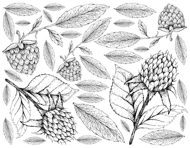 Hand drawn of korean black raspberries and golden raspberries background