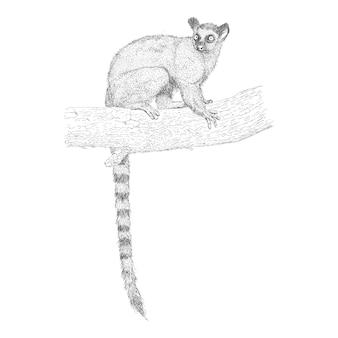 Hand drawn langur illustration vector