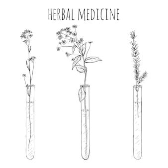 手描きのラベンダー植物、invitroまたはバイアルの花、スケッチイラスト