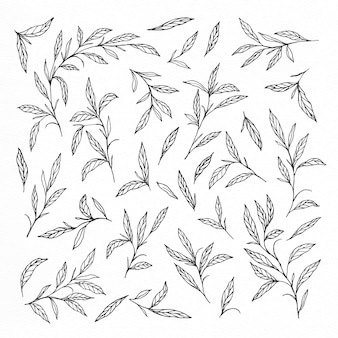 Hand drawn leaves and branches collections