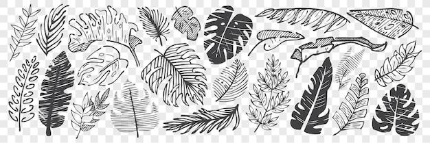 손으로 그린 잎 낙서 세트. 연필 분필 드로잉 스케치 다른 모양 나무 단풍 투명 배경에 고립의 컬렉션입니다. 식물 그림의 일부입니다.