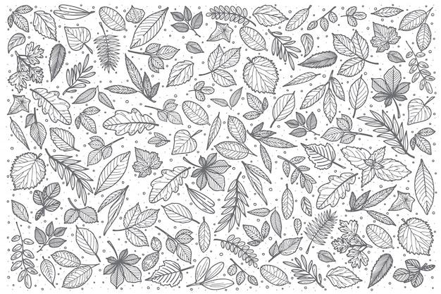 Hand drawn leaves doodle set