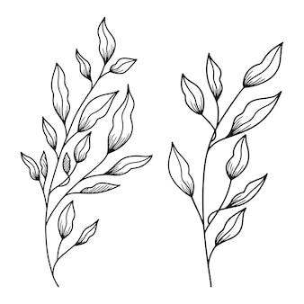 手描きの葉の線画