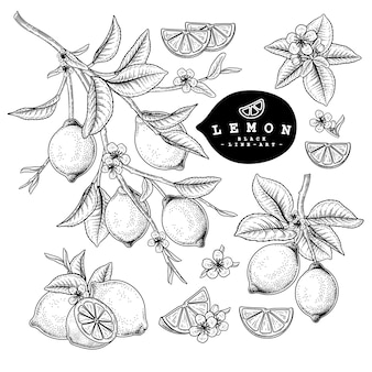 Hand drawn lemon black and white with line art retro style isolated on white backgrounds.
